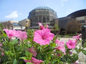 Alverno College rotunda petunias in summer