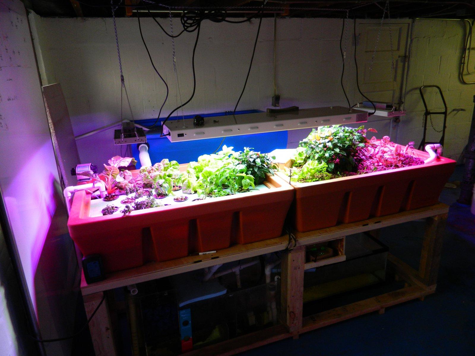 Freshwater aquarium fish milwaukee - Heart Haus