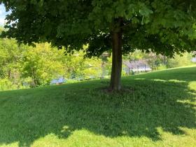 Cupertino Park
