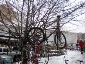 Treed Bike