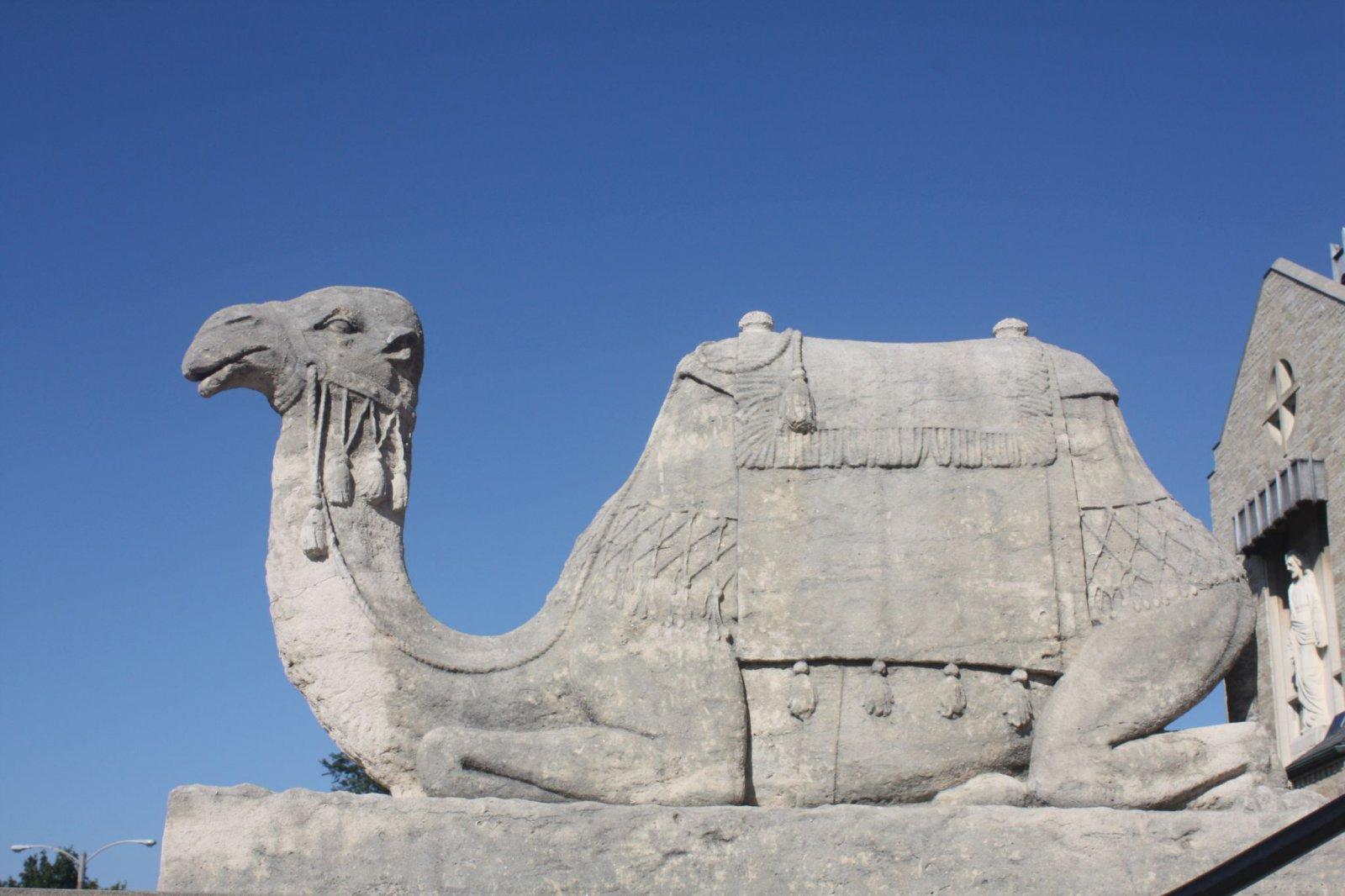 Camel at the Tripoli Shrine Center