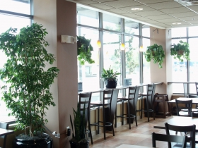Troop Café is a relaxing place to be, with its warm earth tones, wood accents and plenty of greenery.