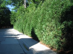 Thick Hedges