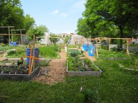 The community garden at All Peoples Church