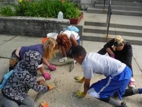 Kids working on weeding in the sidewalk
