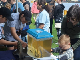 Riveredge Nature Center shows off its baby sturgeons at Harbor Fest 2018