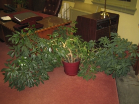 Former President Hines had a green thumb. His houseplants were immaculately tended. Not a dead leaf in sight.