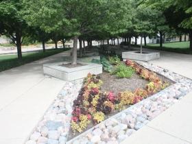 MGIC plaza shade trees