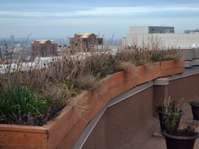 An herb garden on the rooftop of the Pfister Hotel.