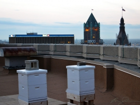 Bee hives on top of the Pfister Hotel.