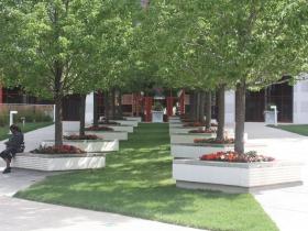 Plaza East shade trees