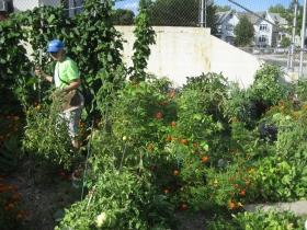Three Holy Women Community Garden