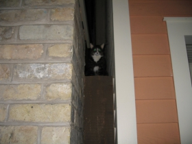 Abby the cat