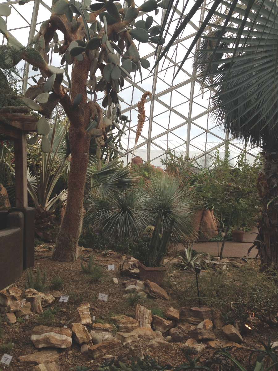 A look inside The Domes.