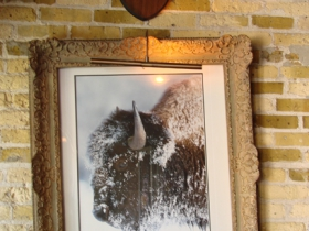 Buffalo art.
