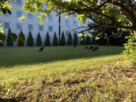East Side Turkeys