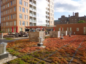 A tray based green roof.