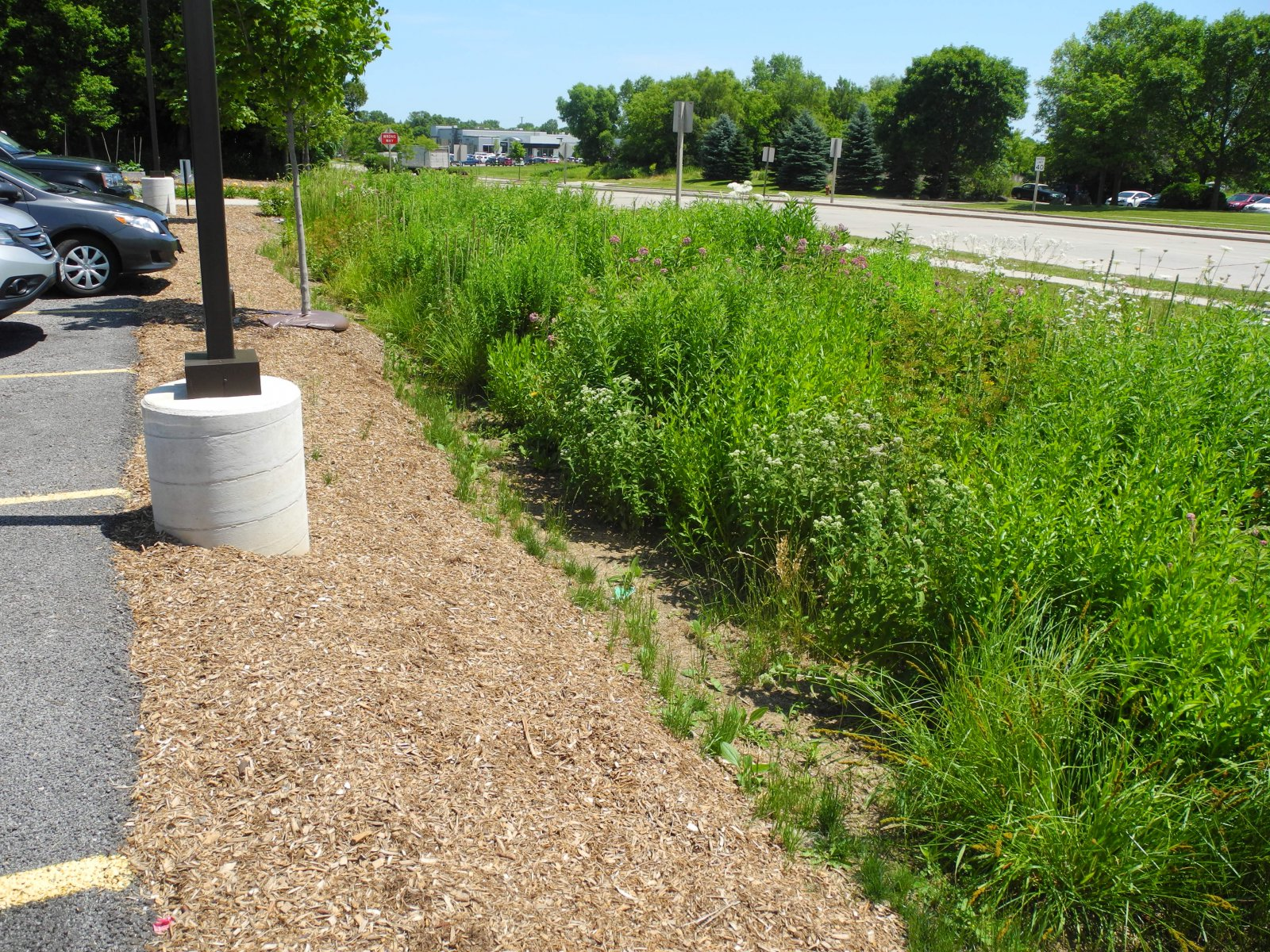Sloping down to rain garden at Outpost Natural Foods