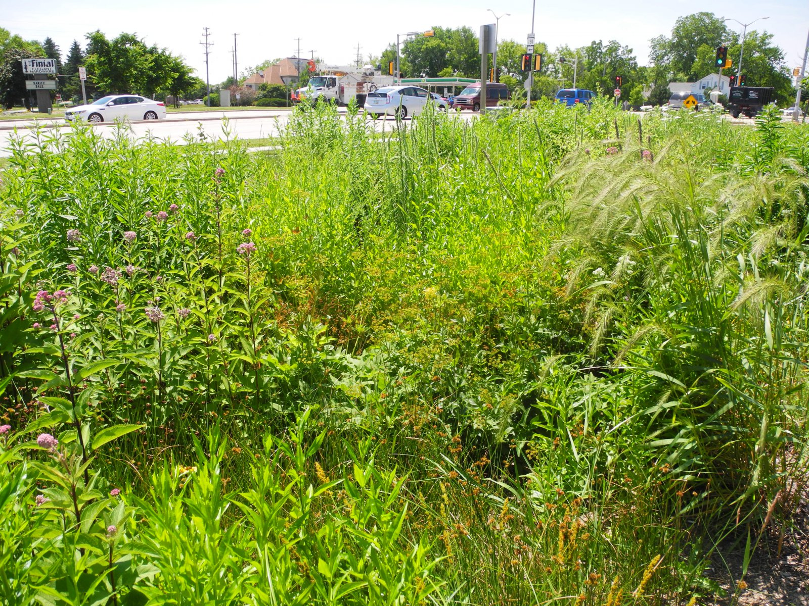 Rain garden at Outpost Natural Foods