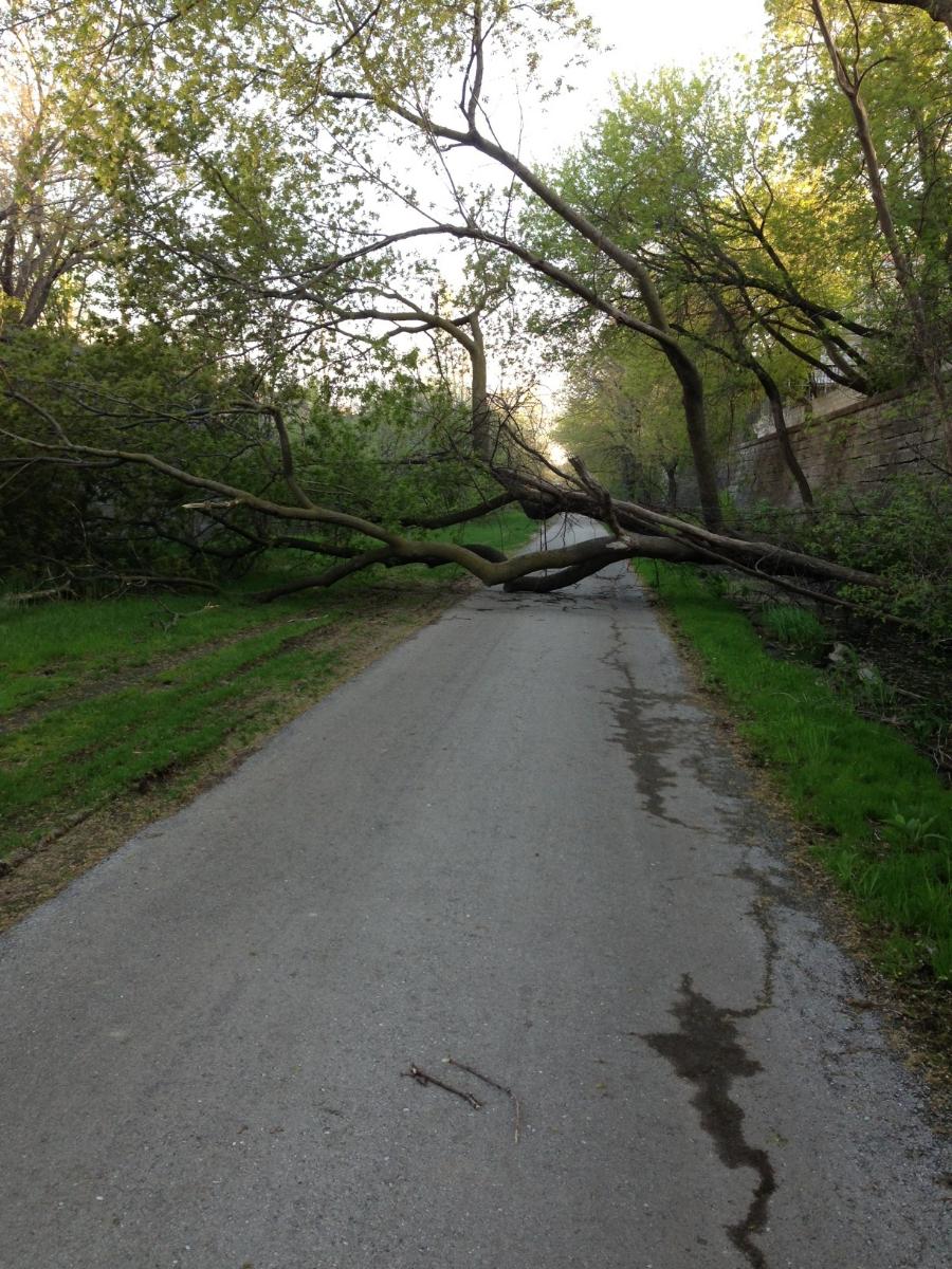 A tree down on the Oak Leaf Trail.