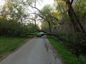 A tree down on the Oak Leaf Trail.
