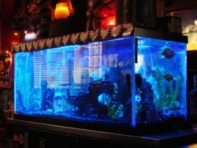 Fish tank behind the bar.