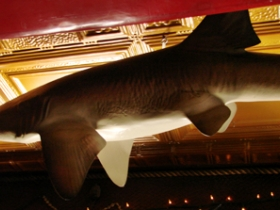 Shark on ceiling donated by regulars Mark and Lynn.