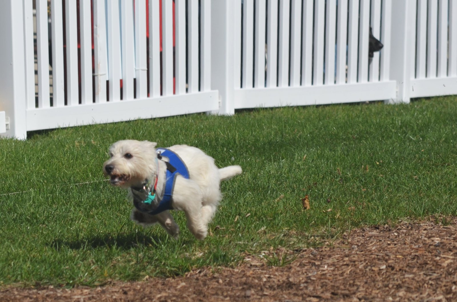 Lure course at Petfest 2018