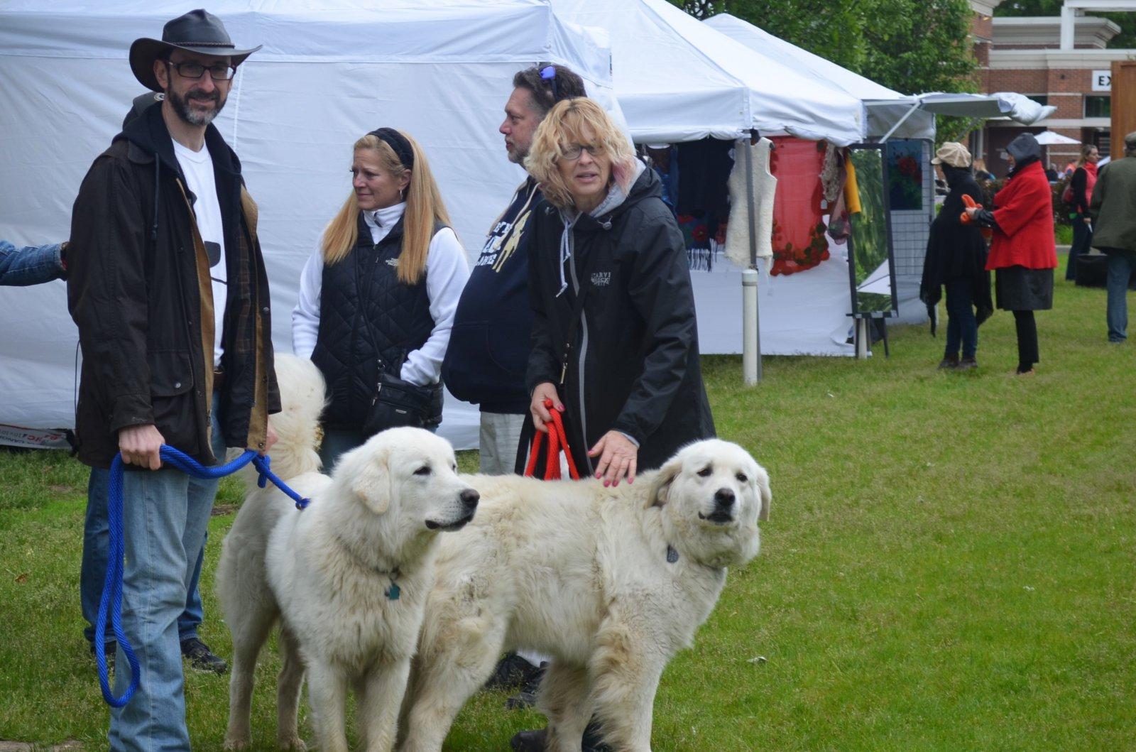 Polish Highland Sheepdogs