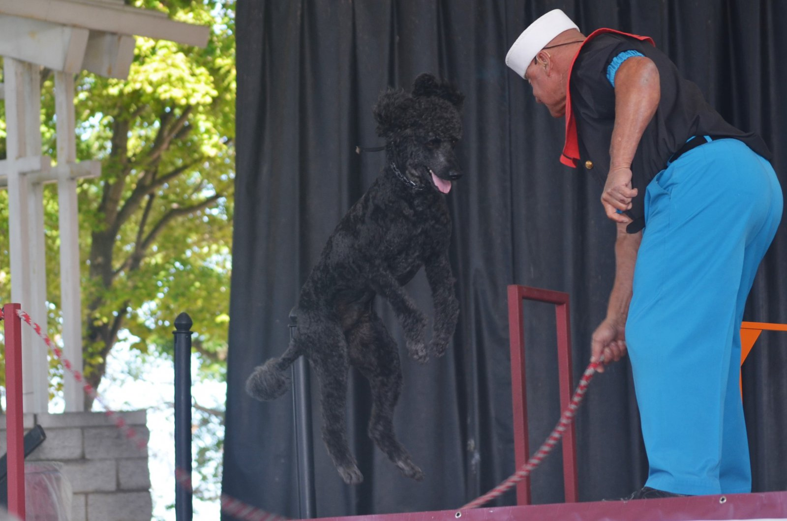 https://urbanmilwaukee.com/wp-content/gallery/summerfest/sailor-the-poodle-and-his-owner-alex-rothacker_pfest18.jpg