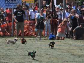 13th Annual Dashshund Derby