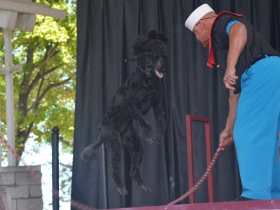 Sailor the poodle and his owner Alex Rothacker