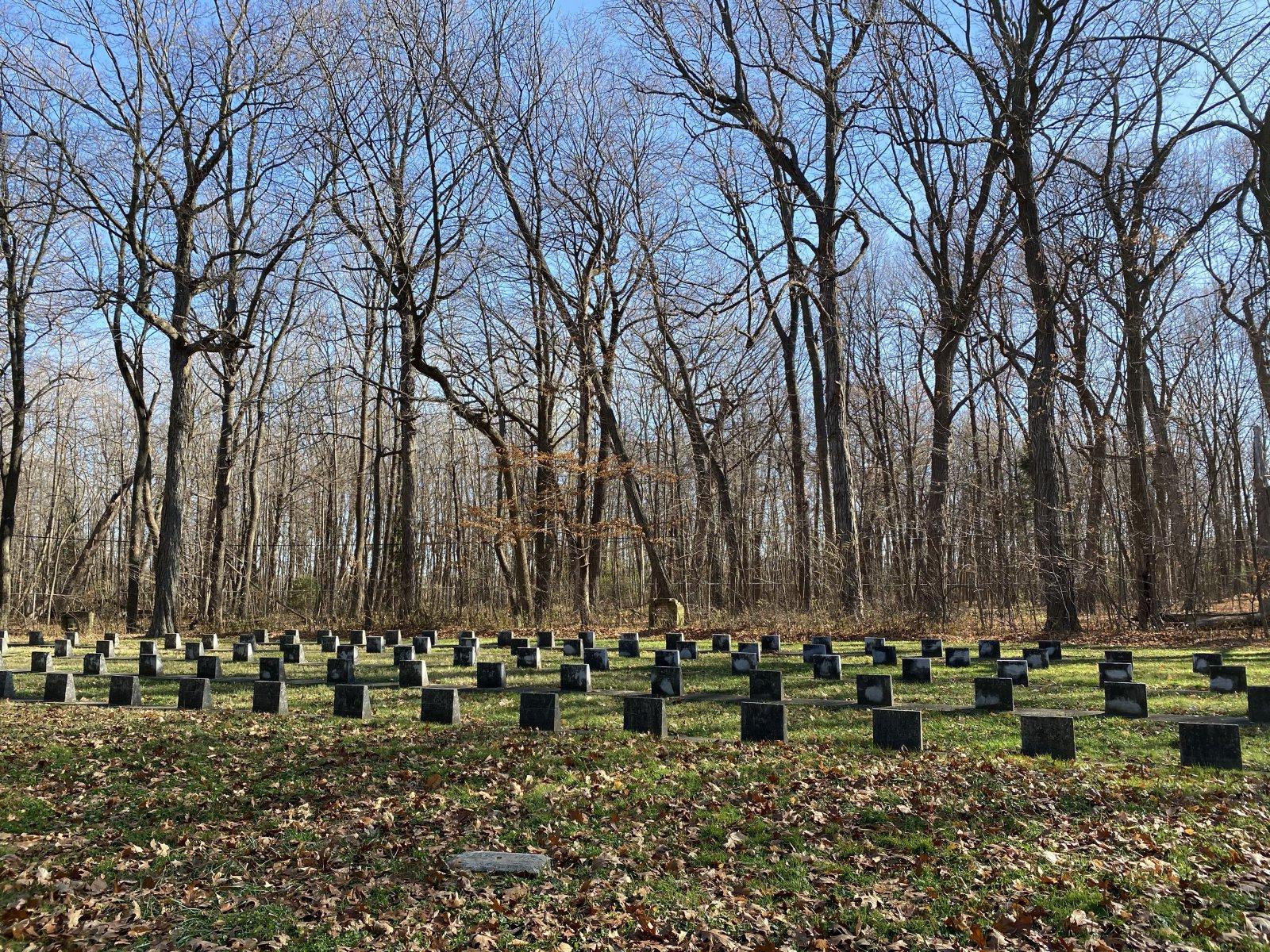 Seminary Woods