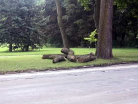 Did the lumberman strike again?