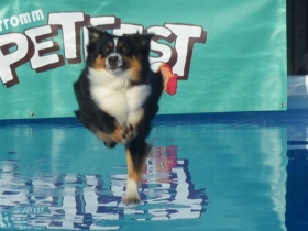 Fromm Petfest 2017