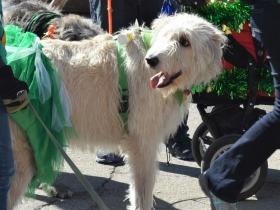 Irish Wolfhounds of Wisconsin