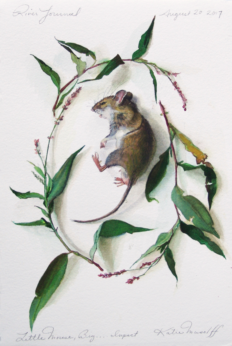 Katie Musolff, Little Mouse, Big Impact, Watercolor on Paper,13.5x9