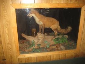 The Thirsty Fox