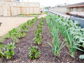 Braise's rooftop garden