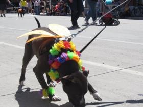 Pride Parade Dog