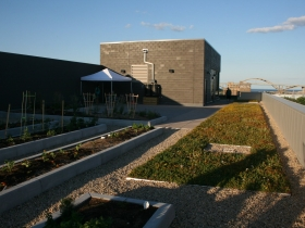 Clock Shadow Building's Green Roof