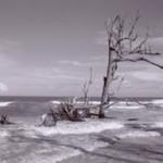 andrew_hertel_landscape_tie
