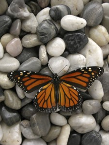 Monarch butterflies migrate south in the fall; we should at least head outside. iStock photo