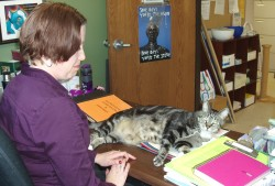 Jerry, one of MADACC's office cats, sprawls across Jessica Huber's desk. Photo by Peggy Schulz.