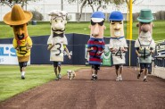 Hank's First Sausage Race. Photo from Milwaukee Brewers.