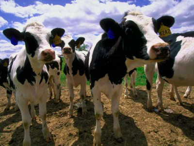 Decline of the Dairy State
