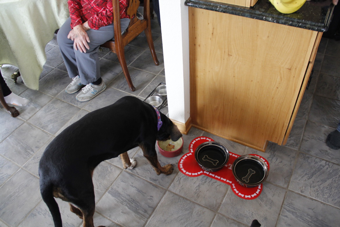 Frank Michna's dog, Sophie, refuses to drink water from the taps in his Caledonia home. Michna said the dog sniffs the tap water and then drinks instead from a bowl filled with bottled water. A study by the environmental advocacy group, Clean Wisconsin, linked pollution in Michna's and hundreds of other wells to buried coal ash from the nearby We Energies Oak Creek Power Plant. Photo by Cole Monka / Wisconsin Center for Investigative Journalism.