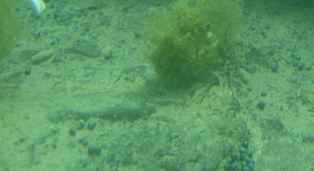 Divers from the UWM School of Freshwater Sciences photographed the lake bottom by the Cudahy Sportsman Club doing unrelated research in 2011. The divers found lead shot widely distributed on the lakebed. Photo from UWM.