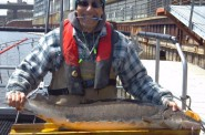 48-inch lake sturgeon captured and released by WDNR personnel on April 22, 2014 (Earth Day). Thousands of metro-area residents have participated in activities focused on restoring this ancient species to the Milwaukee River. (WDNR staff photo)