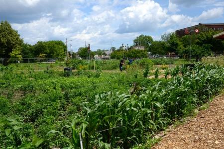 Alice's Garden features in-ground garden beds for neighborhood residents. (Photo by Sue Vliet)